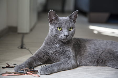 photo of charcoal color cat