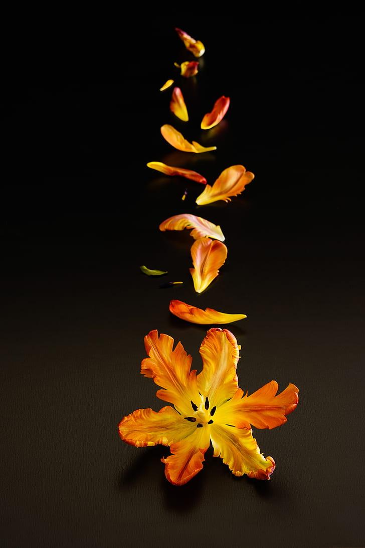 Royalty Free Photo Yellow And Orange Petaled Flowers Falling Pickpik
