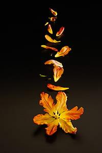 yellow and orange petaled flowers falling