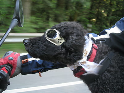 dog wearing sunglasses riding a motorcycle