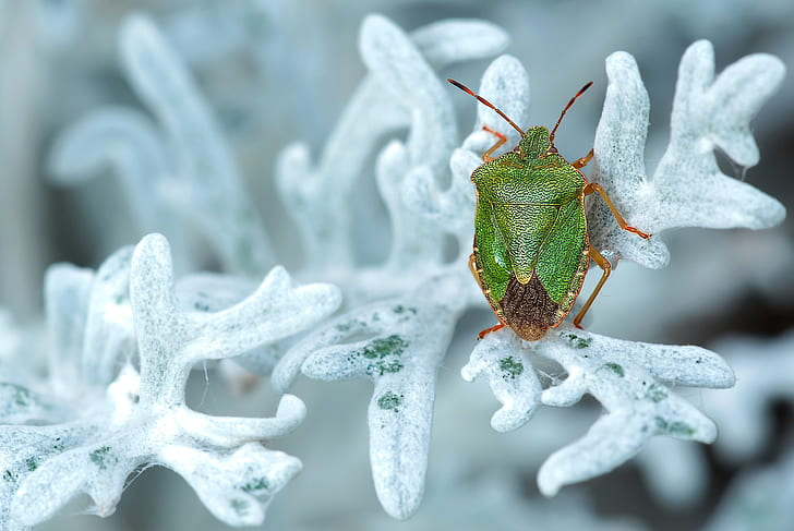 close up photography of green stink bug on leaf covered by snow