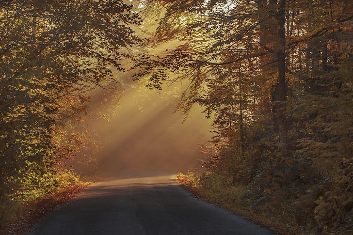 road with sunrays and forest