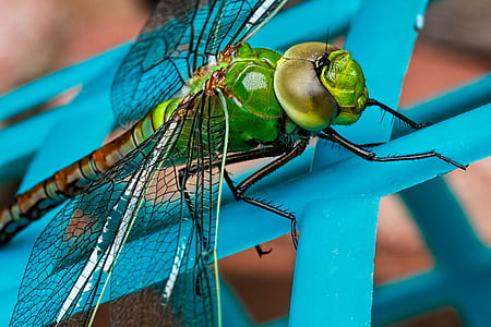 close-up photography of green dragonfly