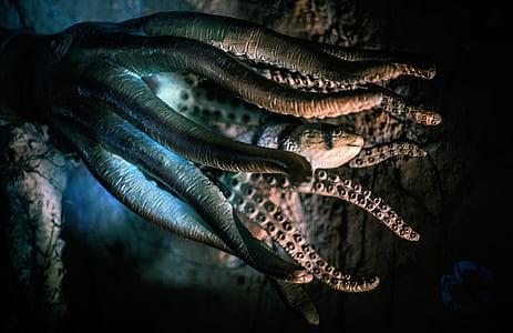 closeup photo of gray octopus