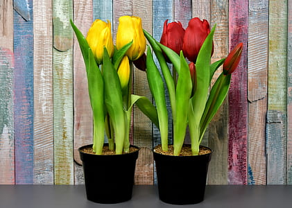 yellow and red flower plants