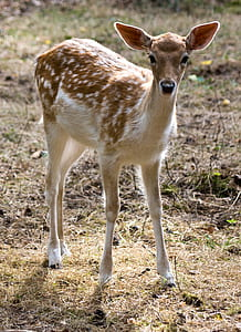 brown and white deer standing on green grass during daytime