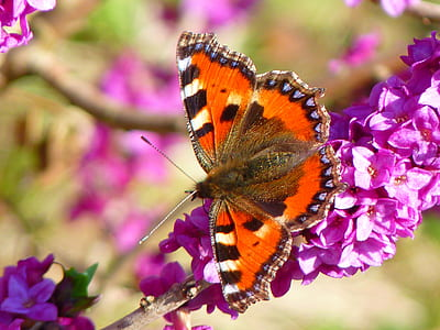 close up photo of orange, black, and white butterfly