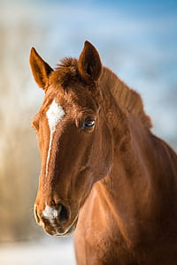 selective photography of brown horse