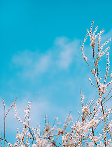 white tree blossom under clear blue sky