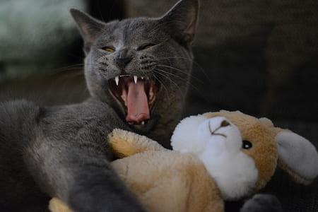 black cat hugging rabbit plush toy