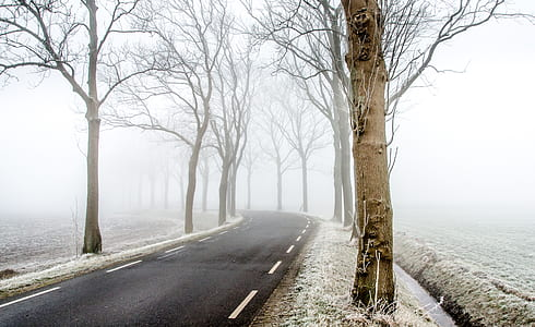 empty road with fogs