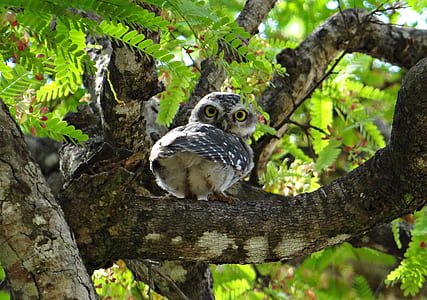 gray owl on tree branch
