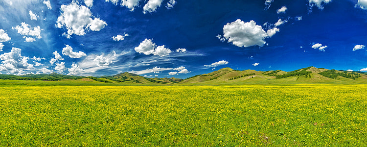 green grassland during daytime