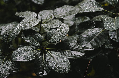 wet leaves of plant