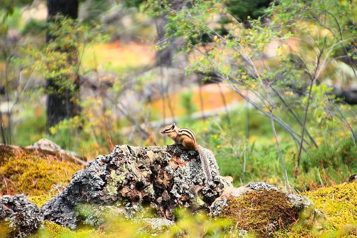 Beige and Black Chipmunk Standing on Grey Rocks Beside Green Tree Plants