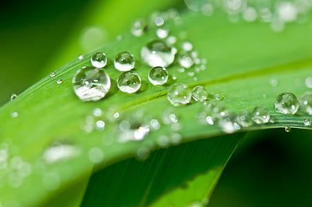 clear water droplets on leaf in macro shot
