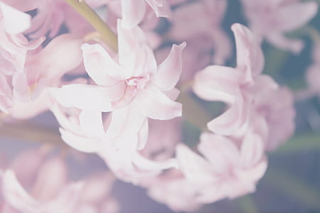 closeup photography of pink petaled flowers
