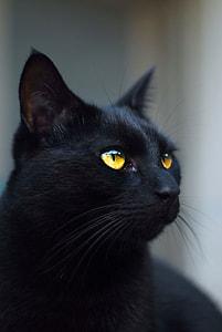 closeup photography of black cat