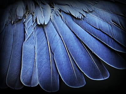 blue feathers in closeup photography