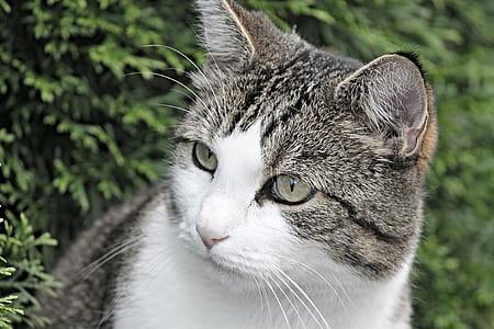 closeup photo of silver tabby cat near green plant