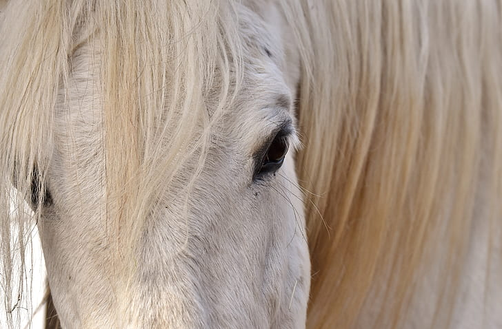 close-up photography of white horse