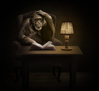 black monkey sitting on sofa chair beside white book and brown table lamp on brown wooden table