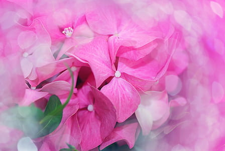 macro shot photo of pink flowers