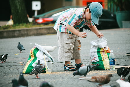 boy about to scoop on product sack using disposable cups near pigeons