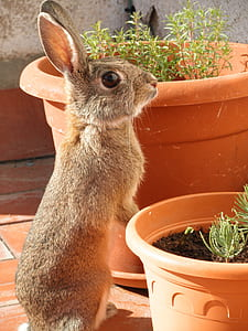 gray rabbit standing near potted green plants