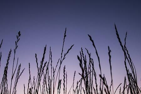 photo of green wheys during nighttime