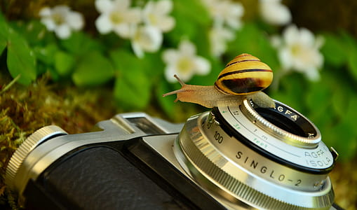 snail on gray and black compact camera