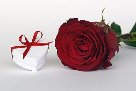white heart gift box beside red rose