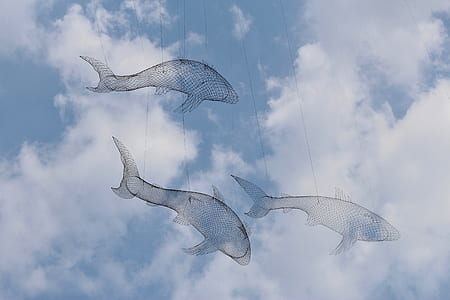 three fish string decor under white clouds and blue sky