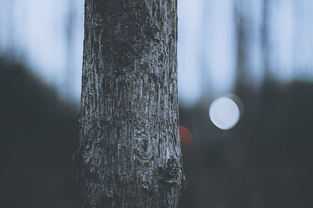 shallow focus photography of tree trunk