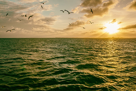 Seagull birds flying in the sky over the ocean at sunset