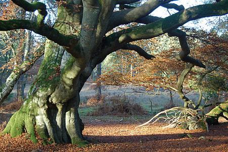green trunk tree