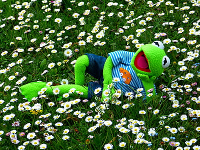 Kermit the frog on garden