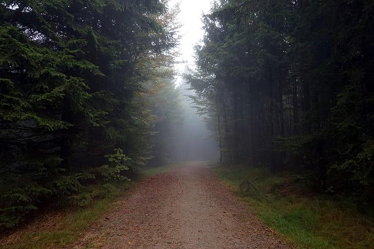 photography of empty pathway
