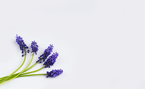 five lavender flowers