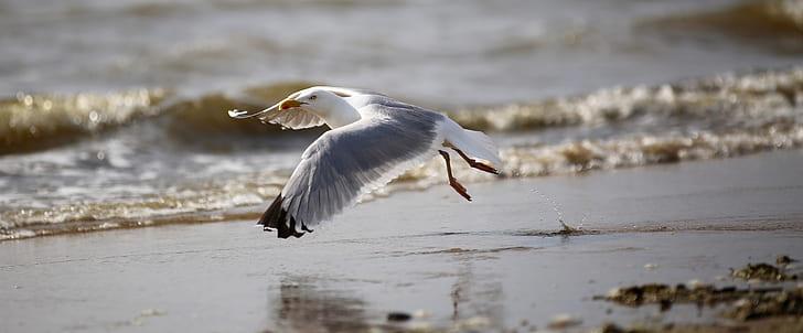 flying egret