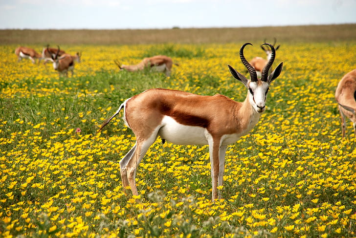 brown antelope standing on yellow bed flowers