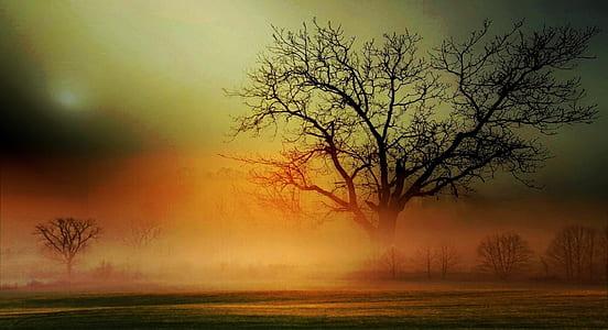 brown bare tree fields