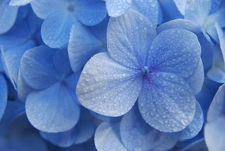 closeup photo of blue petaled flowers