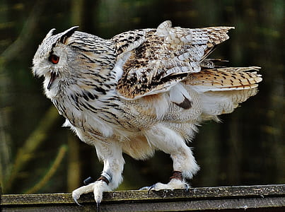 brown and white owl standing on gray wooden surface