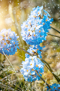 shallow focus photography of blue petal flowers