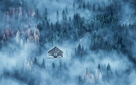 house surrounded by pine trees and fogs