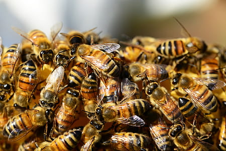 close-up photography of honeybee colony