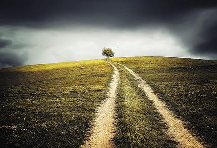 road in between of grass under dark clouds