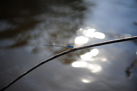 Blue Dragonfly Perch on Tree Branch