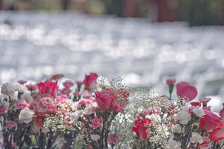 white-and-pink roses